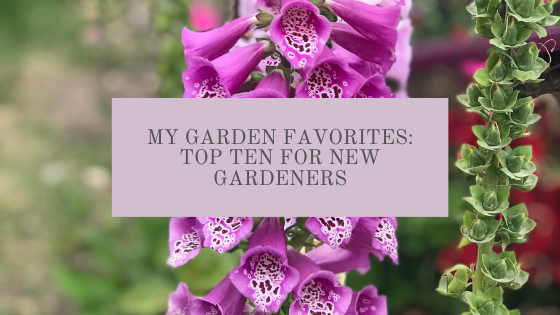 Top Ten Gardening Favorites for new and seasoned gardeners for herbs, vegetables and cut flowers